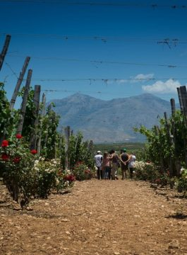Petit Creta Olive Oil Farm Expereince Afbeelding 34 - Als Groep Op Reis